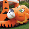 Preview tiger belly   Inflatable Rentals